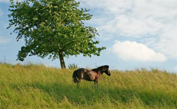 Geschulte Pferde für Therapeutisches Reiten